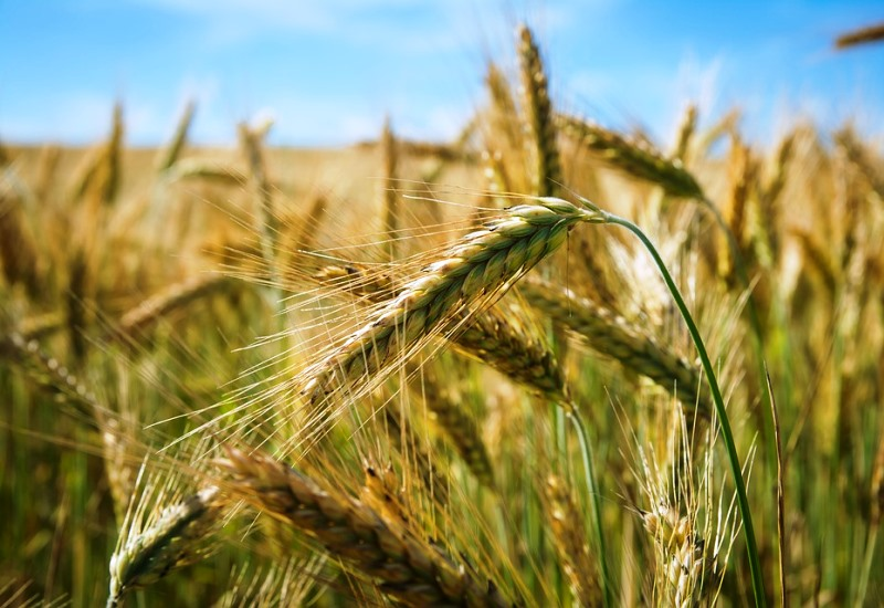 Diversification agricole et méthanisation : l'exemple de la Ferme de Champenois à Amanvillers
