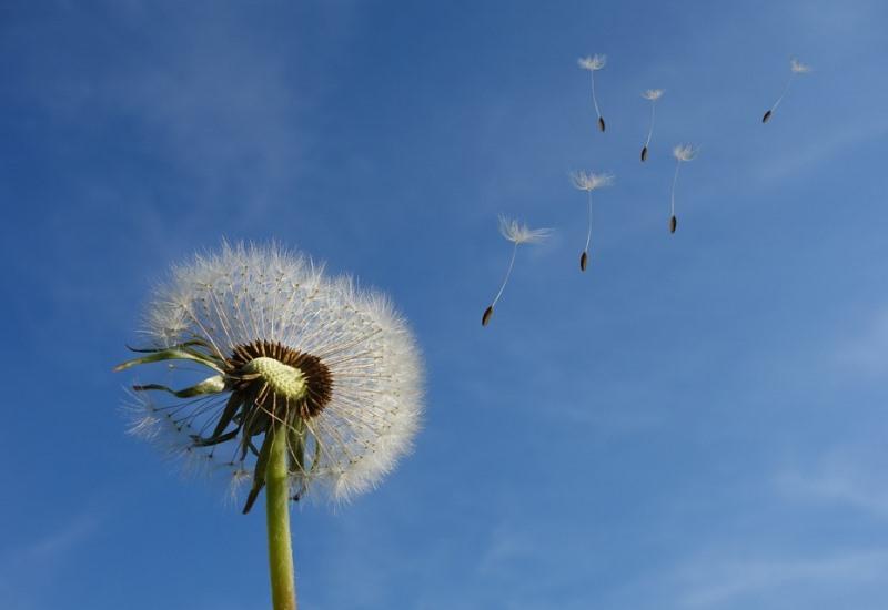 Des sentinelles pour signaler les pollens allergisants en Lorraine