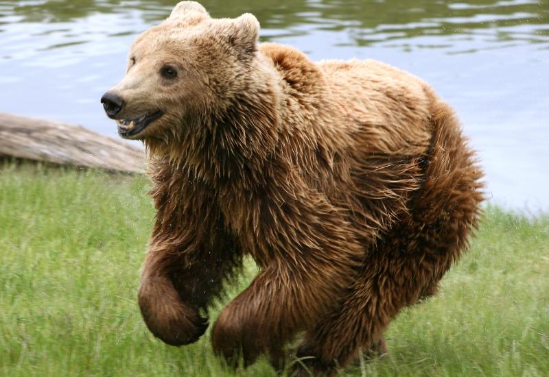 Forêt des ours au Zoo d'Amnéville