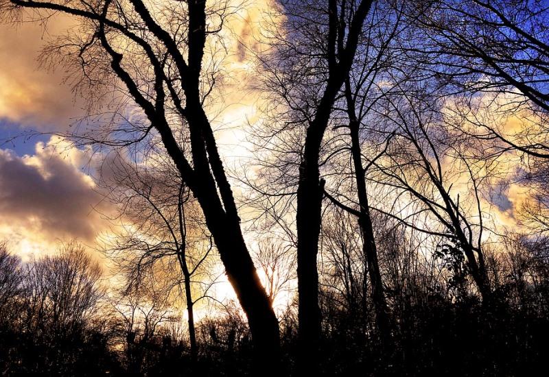 De l'arboretum du Parc du Grand Pâtural à Longeville-lès-Metz