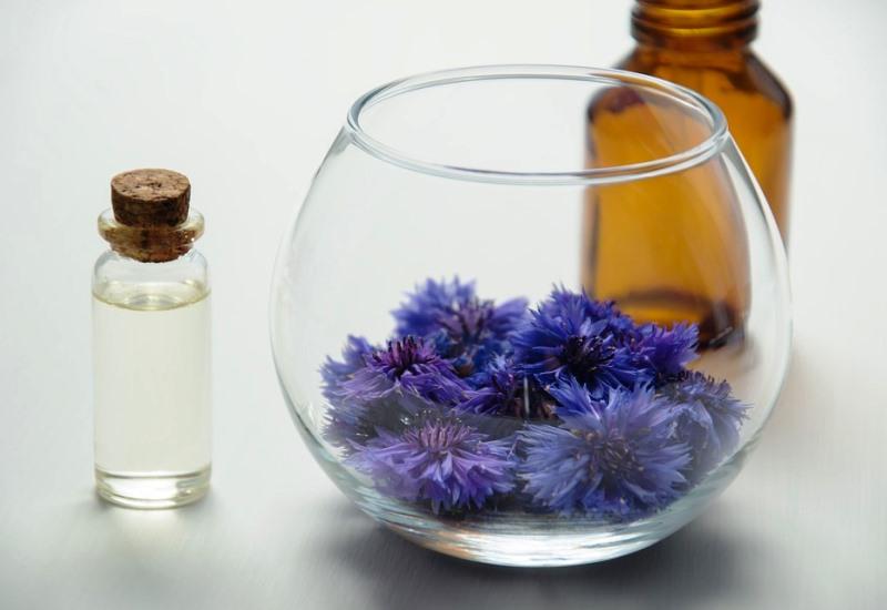 Metz récupère une extraordinaire collection de plantes médicinales